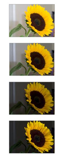 sunflower-assignment.jpg