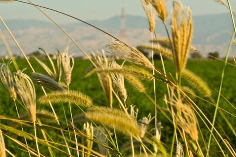throughthegrass.jpg