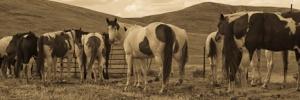 horses_sepia